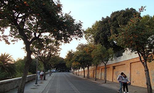albicocchi a Via Adamo Mickiewicz Roma