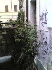 parcheggino (1)