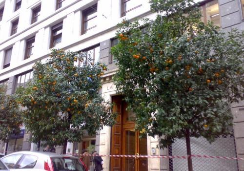 clementineavvelenate